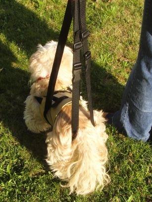 Dog Design Tiffys Gehhilfe für kleine Hunde die perfekte Unterstützung beim Laufen oder Treppensteigen gr.S 48-60cm Körperumfang. Aus Deutscher Fertigung - hoher, Robustes und abwaschbares Material
