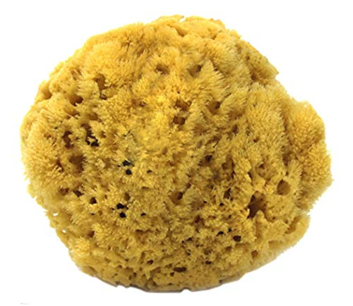 "100% Natural Sea Sponge 5-6"" by Spa Destinations®""Creating The in Home Spa Experience"" for The Perfect Bath or Shower Experience."