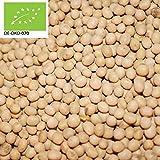 500g Bio Sojabohnen aus Italien Plastikfrei in Papiersack verpackt Soja | 0,5 kg | unbehandelt | asiatische Küche | in kompostierbarer Verpackung | STAYUNG