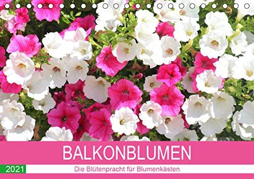 Balkonblumen. Die Blütenpracht für Blumenkästen (Tischkalender 2021 DIN A5 quer)