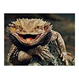 NiYoung 500 Pieces Jigsaw Puzzle for Kids Adults - Funny Bearded Dragon Lizards, Artwork Art Premium Quality Large Jigsaw Puzzle Toy for Intellectual Educational Home Decor (20.5x15 Inch)