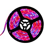 Plant Lights, iNextStation 16.4ft/5M LED Plant Grow Strip Light SMD 5050 Waterproof Grow Light Rope Lights Red Blue 4:1 for Aquarium Greenhouse Hydroponic Plant, Garden Flowers Veg Grow Light DC 12V