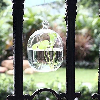 Roovtap Hängevase Glasvase Transparent Handgemachte Fischglas Goldfischglas Goldfischglas Luft-Pflanze Vasen Blase Aquarien Bowl