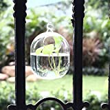 Roovtap Hängevase Glasvase Transparent Handgemachte Fischglas Goldfischglas Goldfischglas Luft-Pflanze Vasen