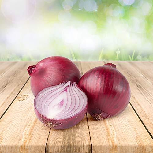 Rote Zwiebel 100 x Samen - Aus Portugal 100% Natürlich Ohne Chemische Anzuchthilfe Oder Gentechnik, Einfach Nur Natur Pur