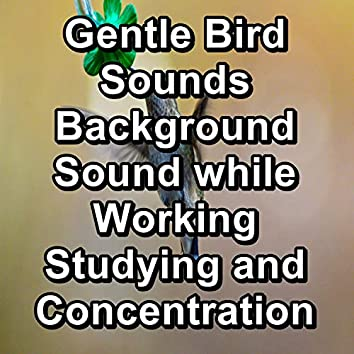 Gentle Bird Sounds Background Sound while Working Studying and Concentration