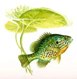 Fish Field Guides