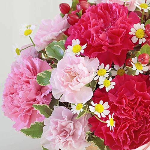 【母の日ギフト】ハッピー(ピンク)mt01az-521308花キューピットお祝い誕生日記念日女性人気お礼プレゼント祖母義母家族