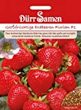 Großfrüchtige Erdbeeren Florian F1