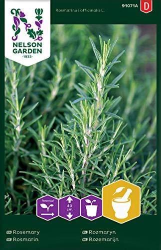 Rosmarin Samen - Nelson Garden Küchenkräuter - Rosmarin Kräutersamen (100 Stück) (Einzelpackung)