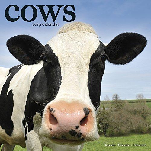 Cows Calendar 2019