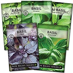 Sow Right Seeds - Basil Seed Collection for Planting