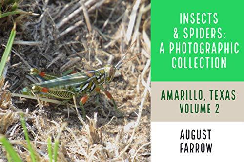 Insects & Arachnids: A Photographic Collection: Amarillo, Texas: United States - Volume 2 (Wildlife: Amarillo, Texas) (English Edition)