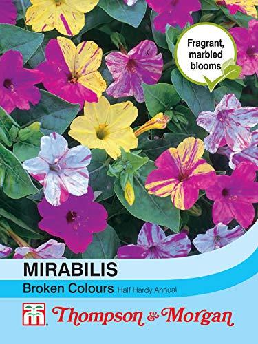 Thompson & Morgan Blumen Mirabilis jalapa Broken Farben 50 Samen