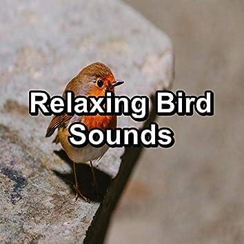 Relaxing Bird Sounds