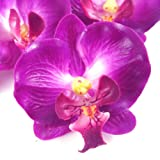 (12) Small Purple Phalaenopsis Orchid Silk Flower Heads - 2' - Artificial Flowers Heads Fabric Floral Supplies Wholesale Lot for Wedding Flowers Accessories Make Bridal Hair Clips Headbands Dress