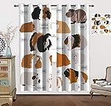 Impressionnants rideaux occultants Cochon d'Inde, design infographique pour les types de races de rongeurs, isolation thermique, 182,9 x 182,9 cm (l x L) - Marron sable, ambre, gingembre