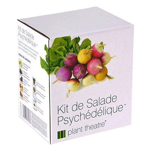Il Kit Ortaggi per un'Insalata Originale di Plant Theatre – 5 fantastiche verdure da insalata da coltivare – ottimo regalo