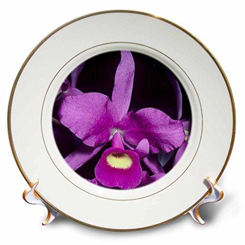 3dRose CP 87220_ 1Orchidee, National Flower von Costa Rica–SAVFY SA22ksc0145–Kevin Schaefer–Porzellan Teller, 20,3cm