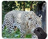 TigressとCub Tigerマウスパッド、Big Cat Officeマウスパッド