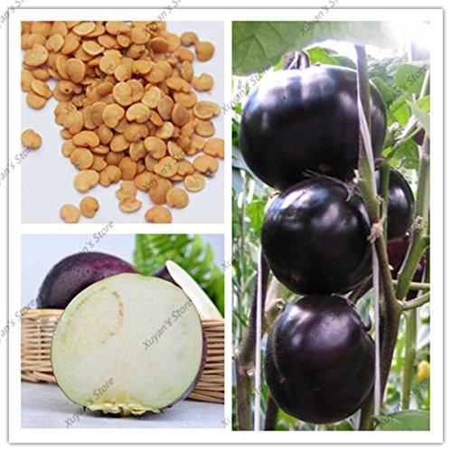 200 pcs Violet Aubergine Graines de tomate noire Valencia ronde de culture biologique Heirloom NON-OGM Graines de légumes