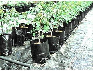 VINAYAKAMART Plastic Nursery Bag, Black, 6 x 7 Inch, 100 Pieces