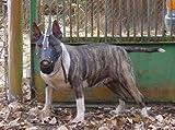 Ligera de piel Bozal para perro Bull Terrier y otros similares Hocico