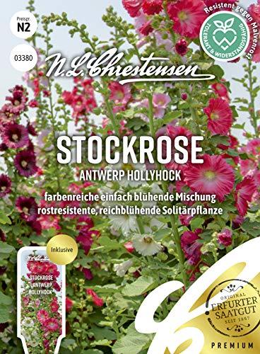 Stockrose Antwerp Hollyhock, farbenreiche einfach blühende Mischung, Samen