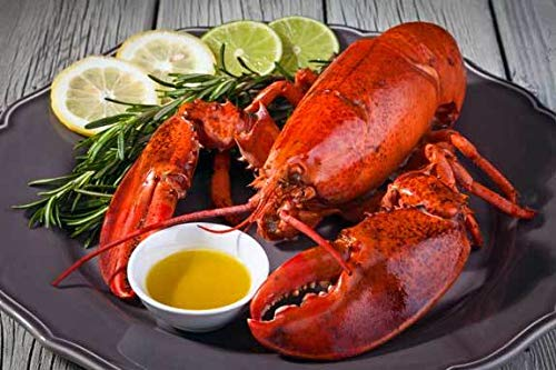 2021 model Live Lobster from Maine Includes Lobsters Factory outlet weighing 1.40 12