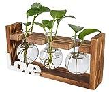 TQVAI Air Plant Terrarium Glass(3 Vase) with Wooden Stand Air Planter Holder - Love