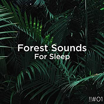 !!#01 Forest Sounds For Sleep