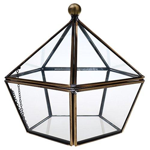 Homyl Luft Pflanzer Mini Glas Terrarium...