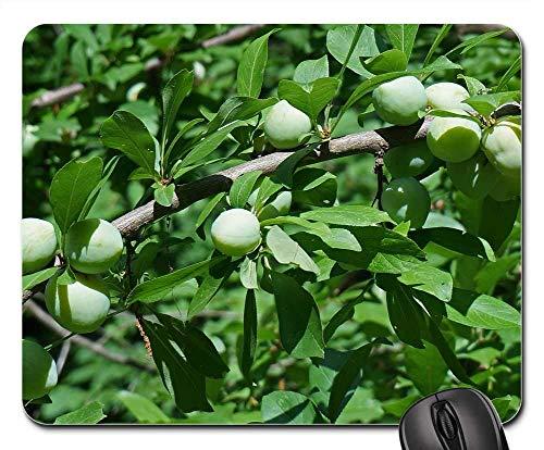 Mauspad - Grüne Pflaumen Pflaumenbaum Gartenpflanze Blätter Frucht