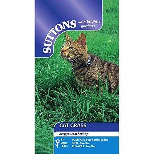 Suttons Seeds 108464 Cat Grass Seed