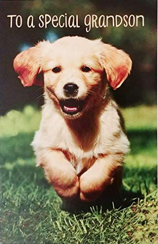 To A Special Grandson Happy Birthday Greeting Card with Labrador Golden Retriever Puppy Dog - The Best of Times
