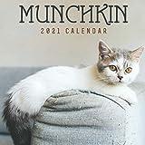 Munchkin Cat 2021 Calendar: Munchkin Cat 2021 Calendar, 8.5 x 8.5 Inch Monthly View, 12-Month, Pets loves
