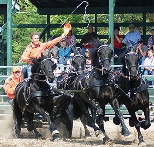 Harnais bricoles 4 chevaux cuir lux Ideal - cheval, noir - brun, Laiton, antidérapantes, à étranglement