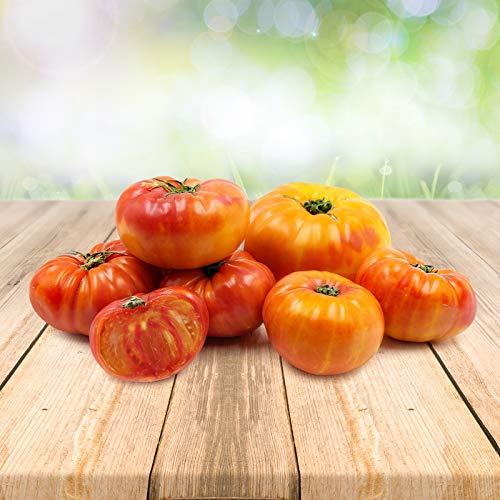 Tomato ''Ananas'' 25 x Samen aus Portugal 100% Natursamen ohne chemische Anzuchthilfen oder Gentechnik