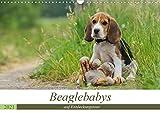 Beaglebabys auf Entdeckungstour (Wandkalender 2021 DIN A3 quer)
