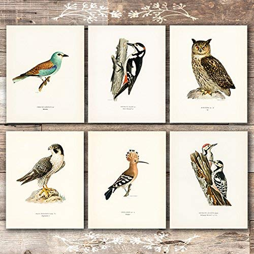 Vintage Bird Art Prints (Set of 6) - Unframed - 8x10s