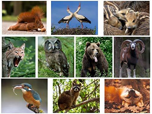 10 dierenansichtkaarten