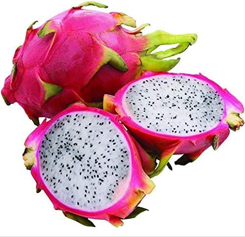 20 Stück Pitaya Samen Weiße Drachenfrucht Köstliche mehrjährige Hylocereus Undatus Samen für Hausgarten Winterdekoration