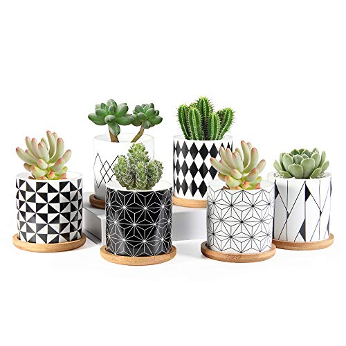 Succulent Pots, ZOUTOG 3 inch Ceramic Mini Succulent Planter Pot, Geometric Pattern Round Small Flower Pots with Drainage and Bamboo Tray, Pack of 6 - Plants Not Included