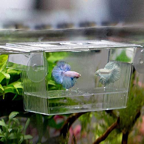 xinxinchaoshi Pecera Caja de Aislamiento de cría de Peces Transparente Caja de Aislamiento de Acuario Cajas de...