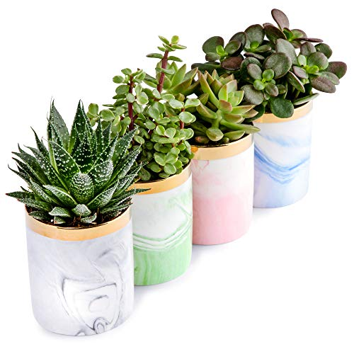 Set of 4 Marble Ceramic Planters, 3.75' Stylish Succulent Pots with Gift Box - Elegant Handmade Flower Pot - Indoor Planters for Cactus, Bonsai, Orchid or Flowers - Decorative Accents and Home Decor