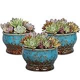 Colorful Succulent Flower Pots