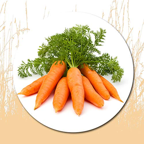 1500 Pcs Carrot Seeds for Planting - Heirloom Packet, Great Gardening Gift