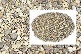 NaDeco Muschelmix Mini 1kg ca. 0,5-2cm kleine Bastelmuscheln - 3