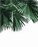 Pintura al óleo por números Hoja Kits de plantas Dibujo Lienzo Pintado a mano Imágenes de bricolaje por números Bodegón Decoración del hogar-SZYH-A23_40X50cm sin marco