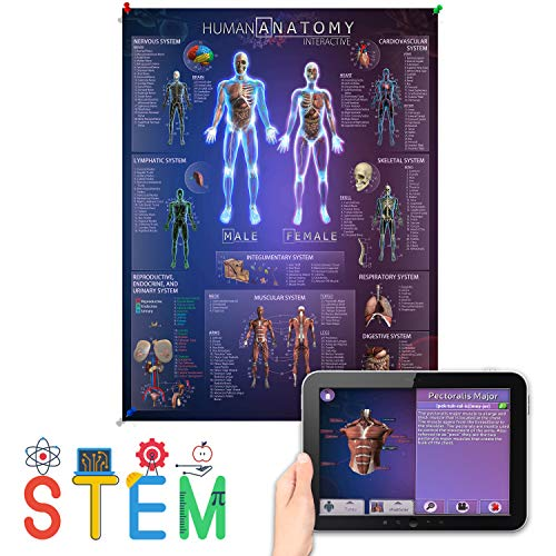 Interactive Laminated Human Anatomy Chart for Kids – Included Augmented Reality Education App – STEM Toy Learning for Boys and Girls Aged 5, 6, 7, 8, 9, 10, 11, 12 (Large)